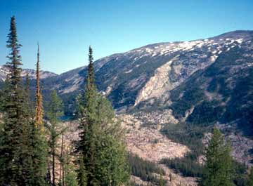 Upper subalpine forest, Bitterroot Mountains